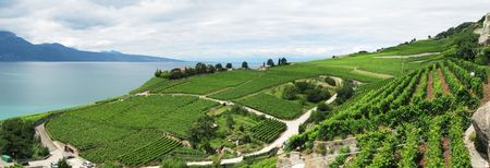 Famouse vineyards in Lavaux region against Geneva lake. Switzerland photo
