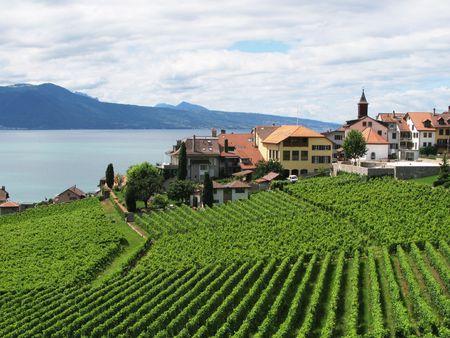 montreux: Famouse vineyards in Lavaux region against Geneva lake. Switzerland