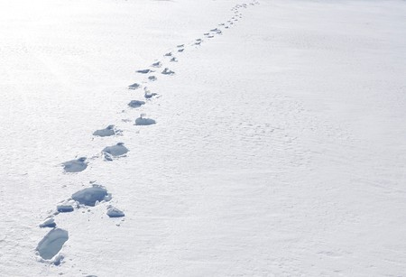 snowbank: Footsteps on the snow. Pizol, Swiss Alps