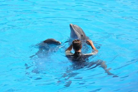 grampus: Dolphin show