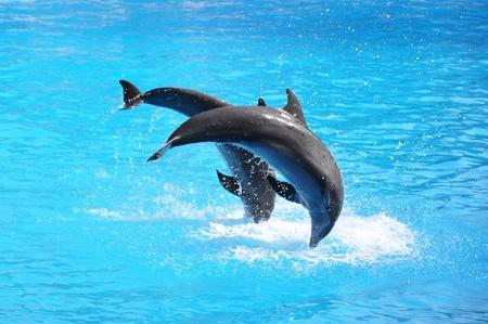 grampus: Pair of dolphins Stock Photo