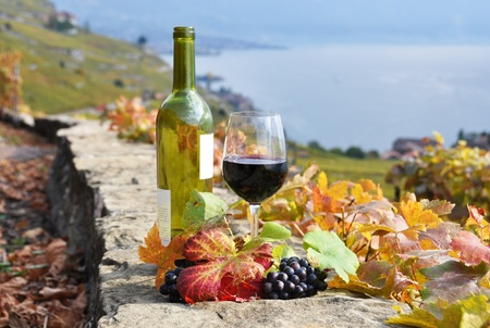 grape field: Red wine and a branch of grapes on the terrace vineyard in Lavaux region, Switzerland