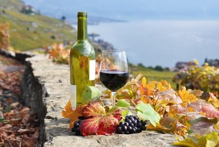 Rotwein und ein Zweig der Trauben auf der Terrasse-Weinberg in Lavaux Region, Schweiz