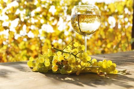 Glas Weißwein und eine Reihe von Trauben. Lavaux Region, Schweiz