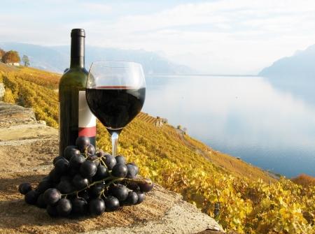 Glas Rotwein auf dem Weingut Terrasse im Lavaux Region, Schweiz