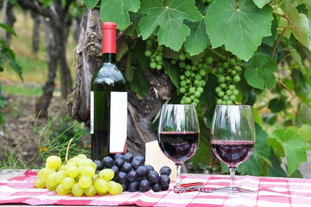 Red wine and grapes served at a picnic Stock Photo - 9943622
