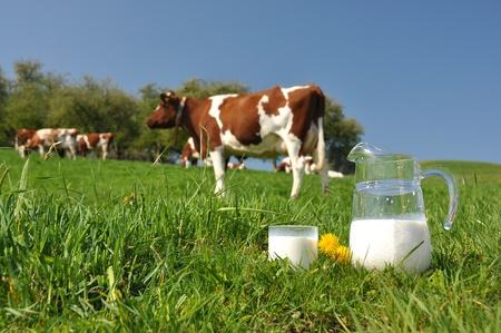 Krug Milch gegen Herde Kühe. Emmental, Schweiz Lizenzfreie Bilder