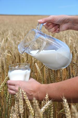 Jug of milk against wheat field  photo