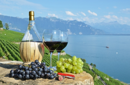 harvest basket: Red wine and grapes  Lavaux region, Switzerland