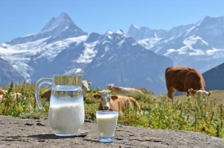 vacas lecheras: Jarro de leche contra manada de vacas región de Jungfrau, Suiza