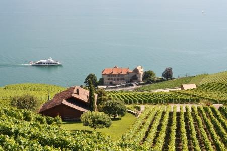 Famous vineyards in Lavaux region against Geneva lake. Switzerland