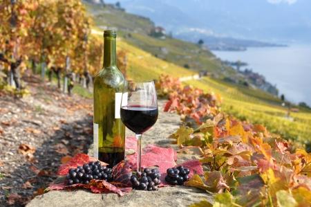 Glass of red wine on the terrace vineyard in Lavaux region, Switzerland  Stock Photo