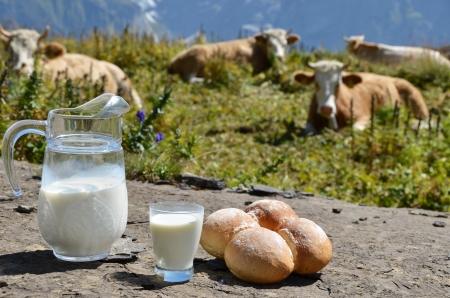 Jug of milk against herd of cows  Jungfrau region, Switzerland  写真素材