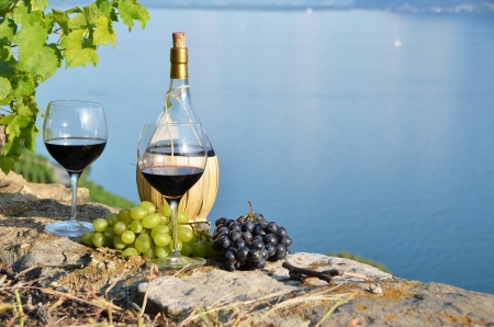 creepers: Wine on the terrace vineyard in Lavaux region, Switzerland  Stock Photo