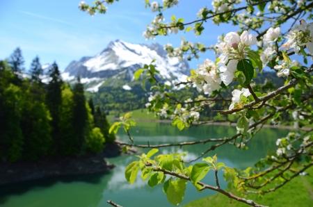 still water: Spring in Switzerland