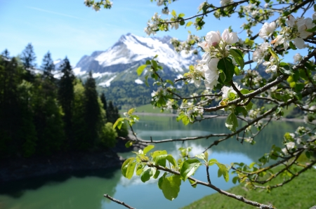 Spring in Switzerland. Waegitalersee photo