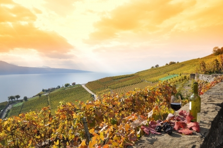 Glass of red wine on the terrace vineyard in Lavaux region, Switzerland photo