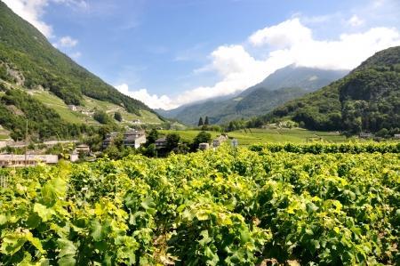 montreux: Vineyards near Montreux, Switzerland  Stock Photo