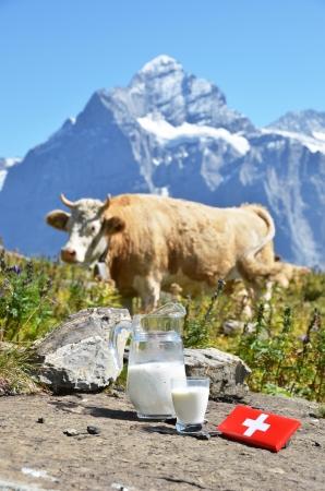 vacas lecheras: Chocolate suizo y la jarra de leche en la pradera alpina. Suiza