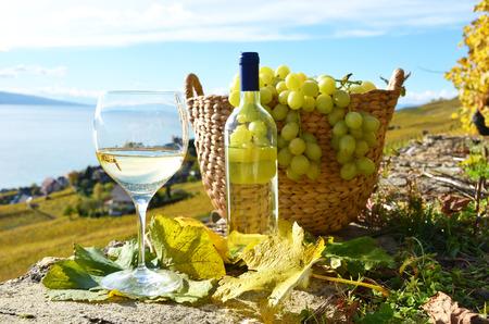 grape field: Wine and cheese. Lavaux region, Switzerland  Stock Photo