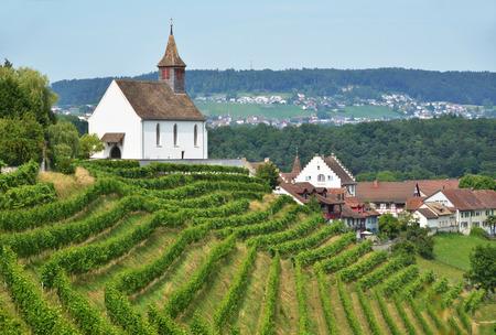 german swiss: Vineyards in Rheinau, Switzerland Stock Photo