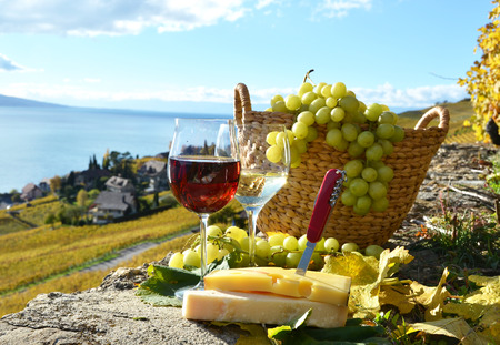 swiss culture: Wine and grapes in Lavaux, Switzerland