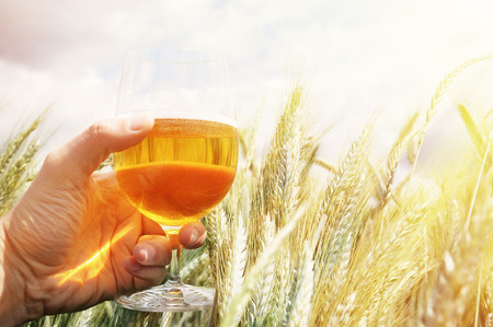 beer production: Glass of beer in the hand against barley ears Stock Photo