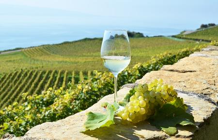 opener: Wine and grapes. Lavaux, Switzerland Stock Photo