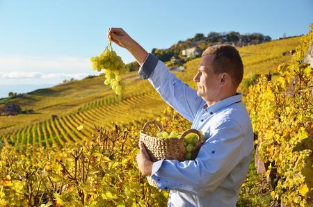 basketry: Man holding a basket of grapes. Lavaux region, Switzerland