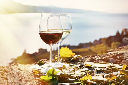 wine and grapes: Wine and grapes. Lavaux region, Switzerland