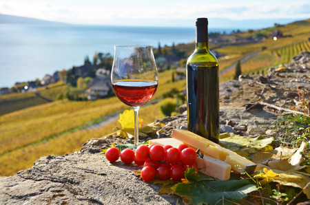 swiss culture: Wine and grapes. Lavaux region, Switzerland