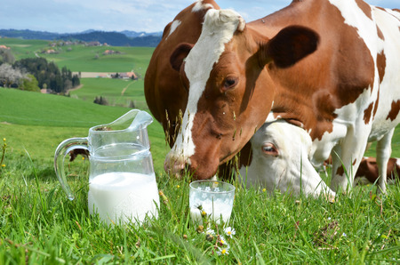 Milk and cows. Emmental region, Switzerland 免版税图像