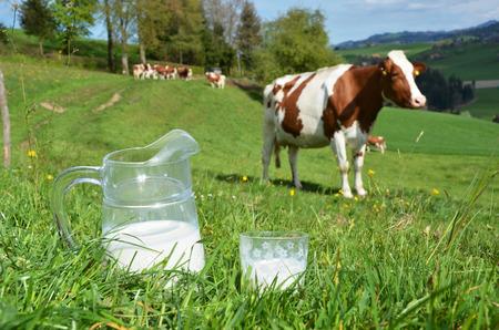 vacas lecheras: La leche y las vacas. Región de Emmental, Suiza Foto de archivo