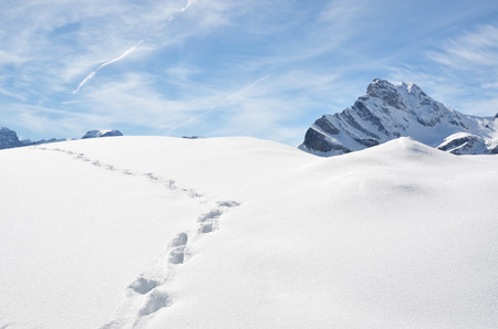 snowbank: Footprints in the snow. Stock Photo