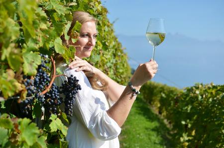 vi�edo: Uvas maduras. Lavaux, Suiza