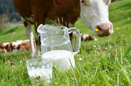 jag: Milk and cows. Emmental region, Switzerland Stock Photo