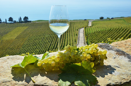 Wine and grapes. Lavaux, Switzerland photo