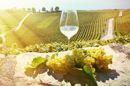 grape field: Wine and grapes. Lavaux, Switzerland Stock Photo