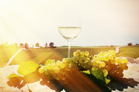 glass wine: Wine and grapes. Lavaux, Switzerland Stock Photo