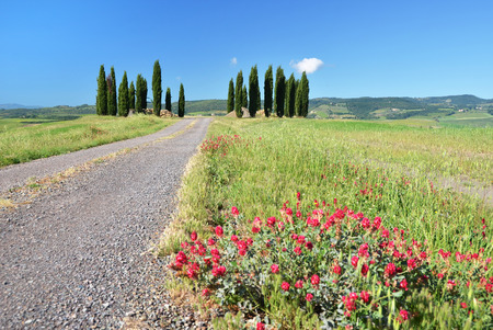 cypress: Cypress trees along rural road. Tuscany, Italy Stock Photo