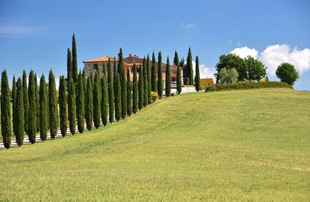 Cypress trees along rural road. Tuscany, Italy photo