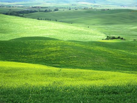 campo de flores: Típico paisaje de la Toscana cerca de Pienza, Italia