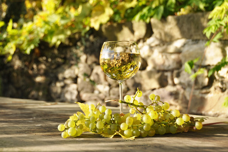 copa de vino: Glass of white wine and a bunch of grapes. Lavaux region, Switzerland
