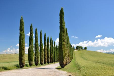nature scenery: Cypress trees along rural road. Tuscany, Italy Stock Photo