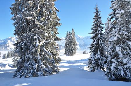 firry: Braunwald, Switzerland Stock Photo