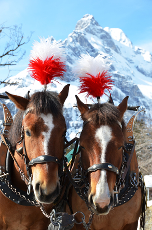 waggon: Pair of horses