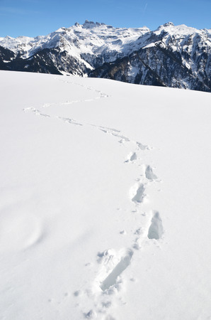 dint: Footsteps on the snow Stock Photo
