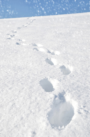 ski traces: Footsteps on the snow Stock Photo