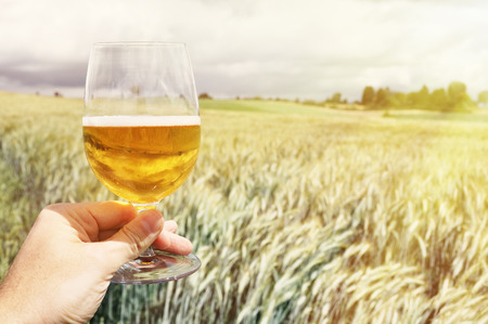 field glass: Glass of beer in the hand against barley ears Stock Photo