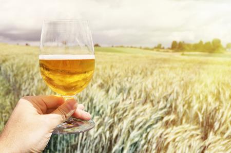 cebada: Vaso de cerveza en la mano contra espigas de cebada